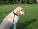 Guide dogs are welcome in our vehicles